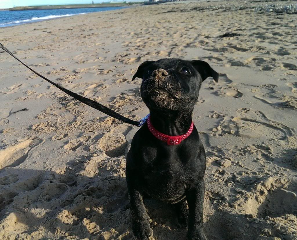 Theia at the beach, another first!! IMAG3138_1_zpsi9d2bt6t
