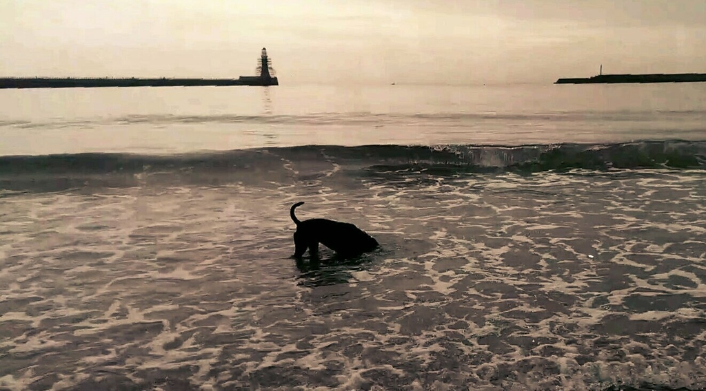 early morning at the beach IMG_20150705_162603_zpszlqfgxyn