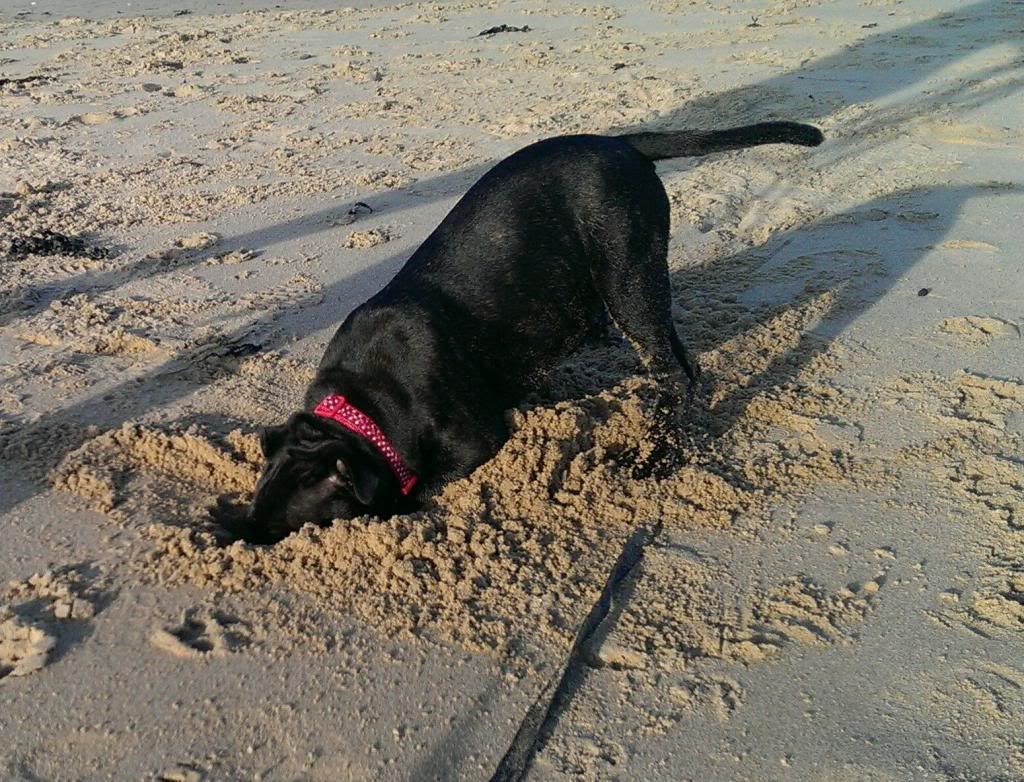 Theia at the beach, another first!! ZOE_0140_3_1_zpsybt7alfu
