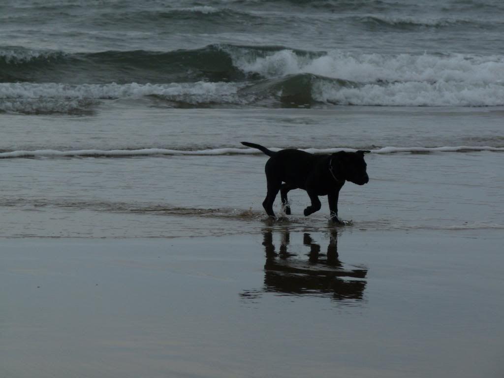An evening on the beach. P1000385_zpsdaa1f48c