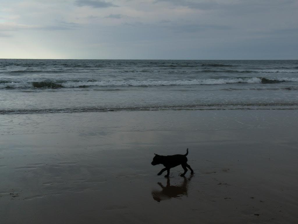 An evening on the beach. P1000389_zps3ca875a3