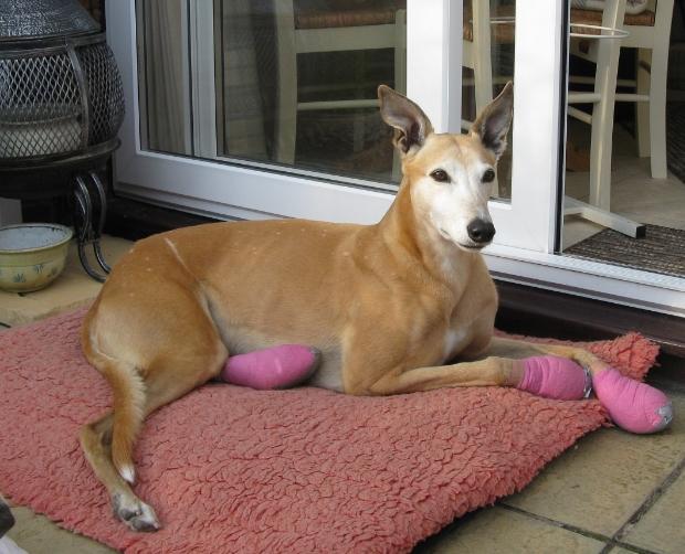 Sponsor a dog scheme IMG_6256_zpsee1669fc