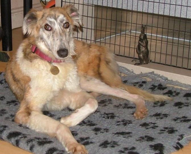 Sponsor a dog scheme Roisin1_zps100798c3