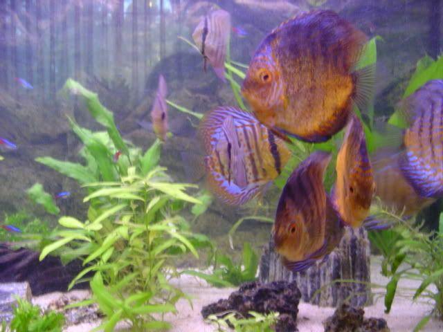Los acuarios de caspercita8 DSC09409