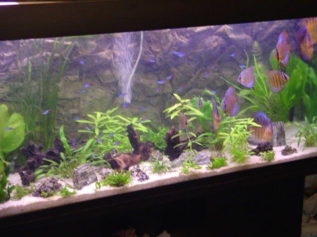 Los acuarios de caspercita8 DSC09412