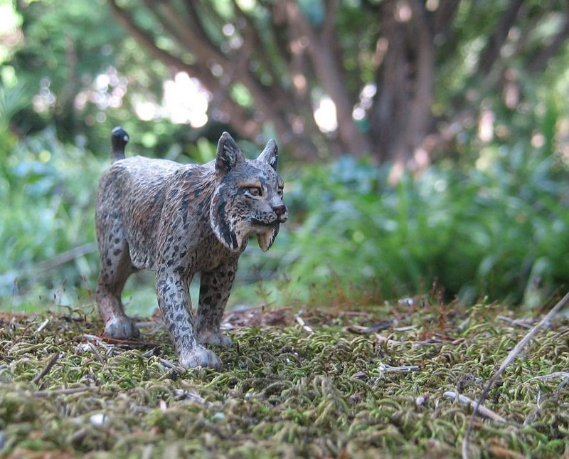 Mojö Iberian Lynx Iberian-lynx-Kosta_zps69cdc433