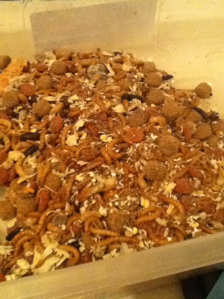 Mealworm Colony 2015! [Picture Thread] - Page 3 IMG_1259_zpsjwvym23a