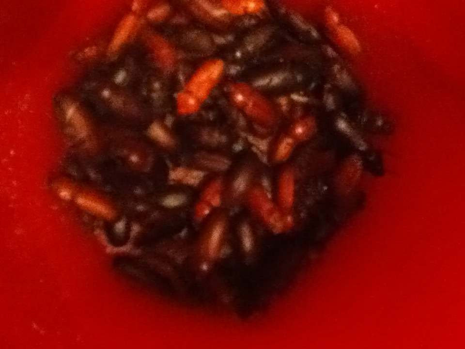 Mealworm Colony 2015! [Picture Thread] - Page 3 IMG_1396_zpsbgxku9wy