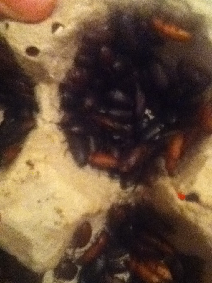 Mealworm Colony 2015! [Picture Thread] - Page 5 IMG_2428_zpsit0cjlqt