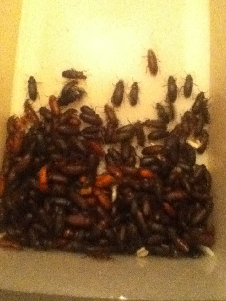 Mealworm Colony 2015! [Picture Thread] - Page 7 IMG_2667_zpsghcvpil2