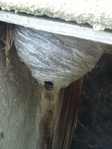 Few More Nests IMG_3359_zps3ff471b9