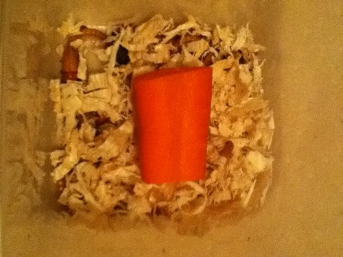 Mealworm Colony 2015! [Picture Thread] IMG_6999_zpsyfamfufd