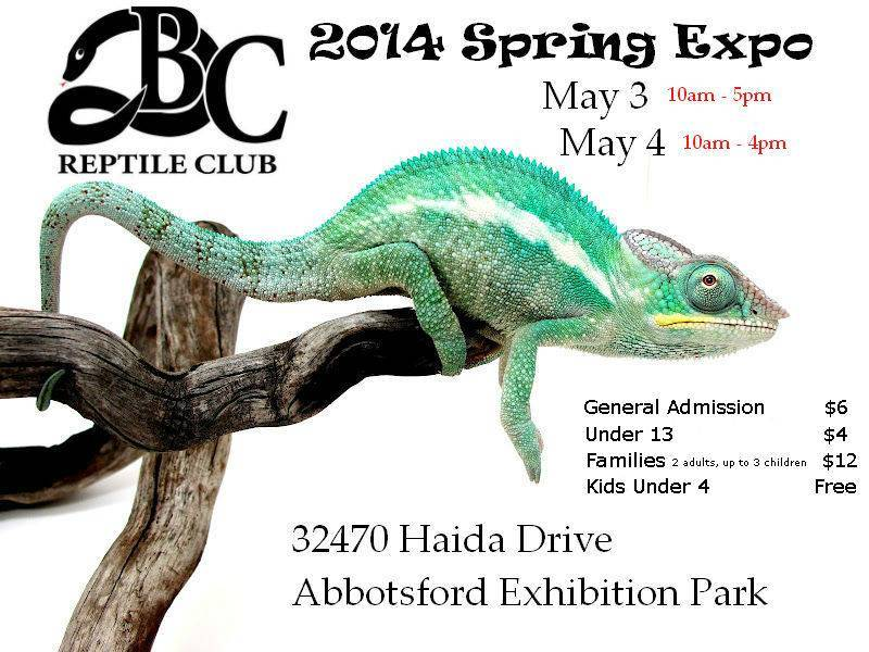 BC Reptile Club | Spring Expo 2014 | May 3rd & 4th Spring2014ShowPosterBrock_zps5ed7d770