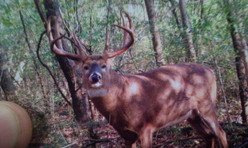 Checking the trail camera last fall!! 857397_10200710573431047_1599951873_o