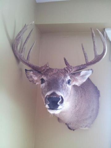 Rage broadheads and a trophy Michigan whitetail! 5471_10200968091908848_284837849_n