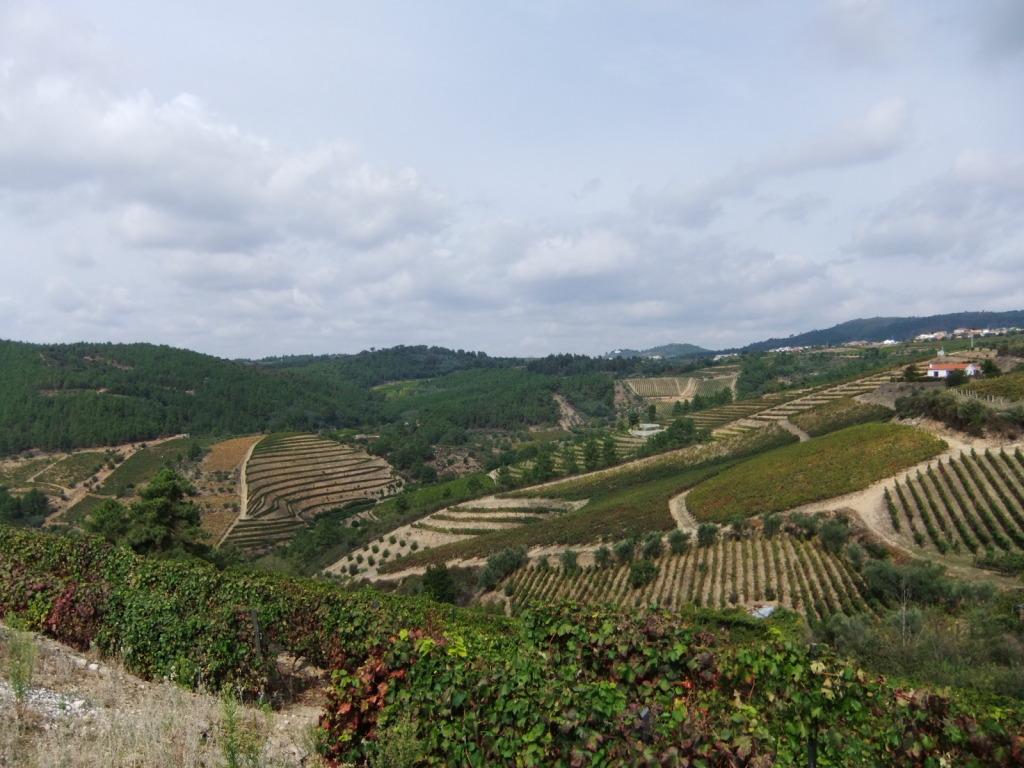 Douro - Até ao Douro AtaoDouro032_zps94d51b16