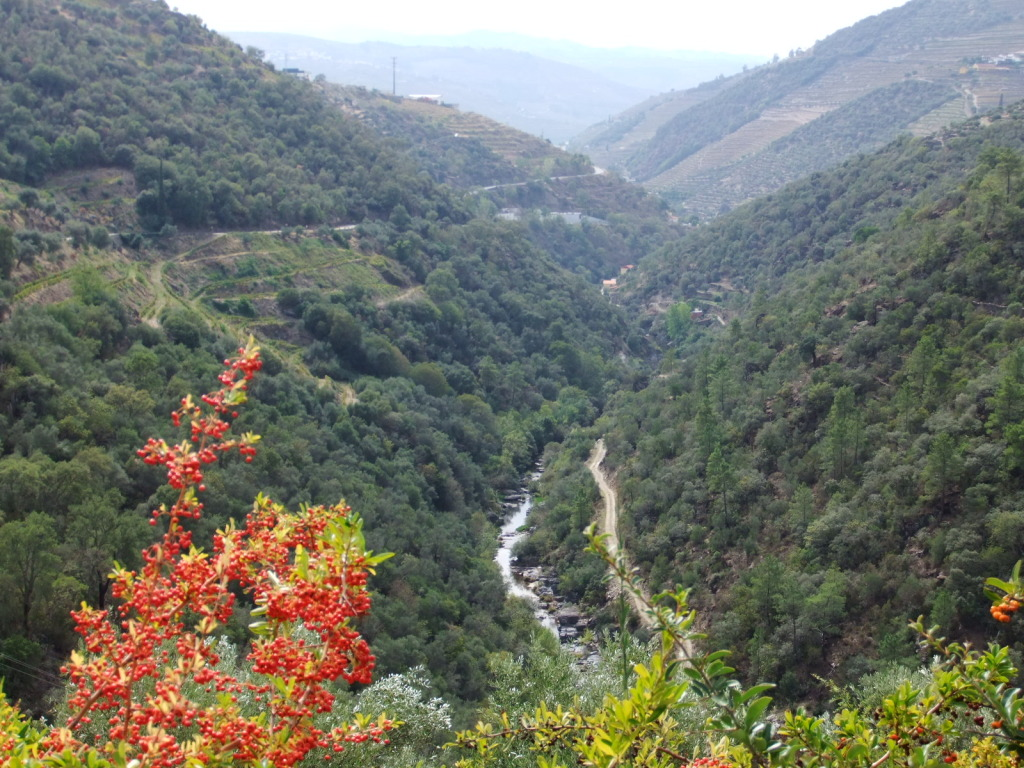 Douro - Até ao Douro AtaoDouro049_zps397d8041
