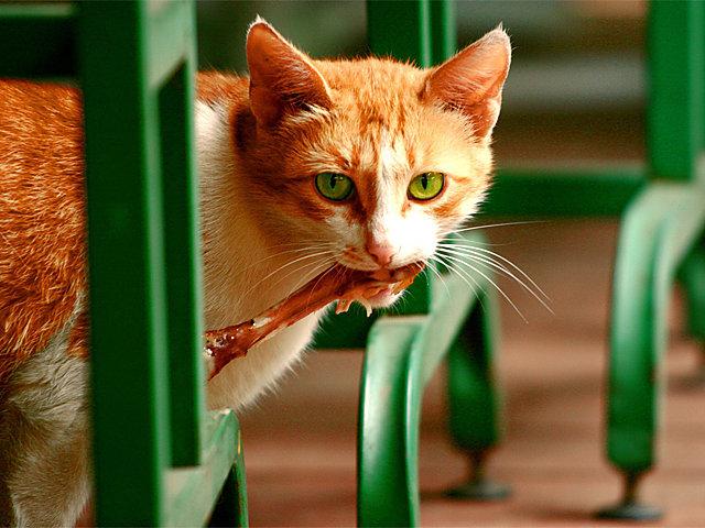Кошки (Cats) - Page 3 Catcafe1_zps7eb356f8