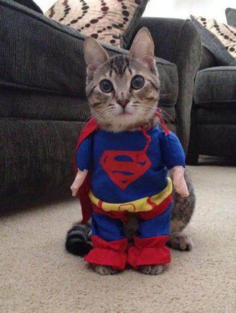 Улыбка (юмор, добрые анекдоты, смешные картинки) - Страница 2 Supermankatze_zpse32095ad