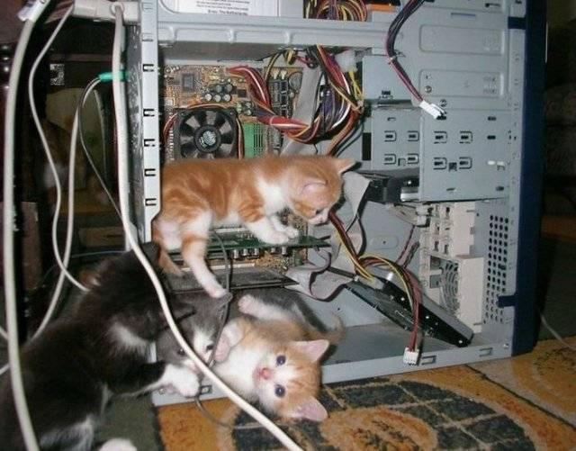 Компьютерное программное обеспечение - Страница 4 Kaciukai_zpsybfzdxmi