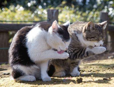 Кошки (Cats) - Page 5 Kate2_zpsdnza4fag