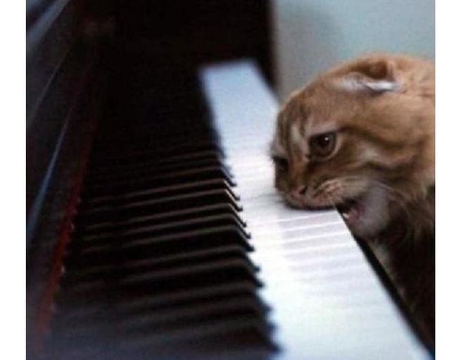 Кошки (Cats) - Page 5 Katinas2_zpsw4oamugh