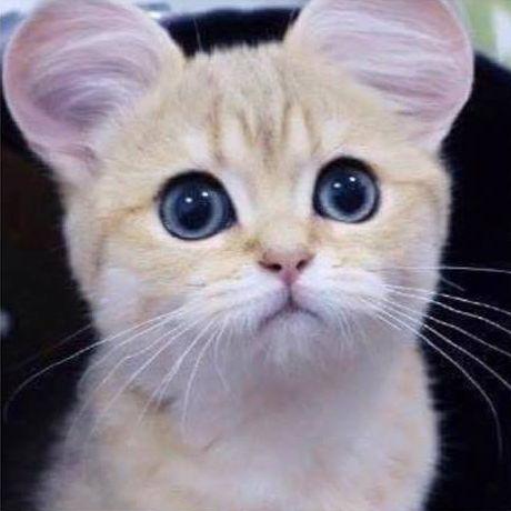 Кошки (Cats) - Page 6 Katite1_zpsywwacmrj