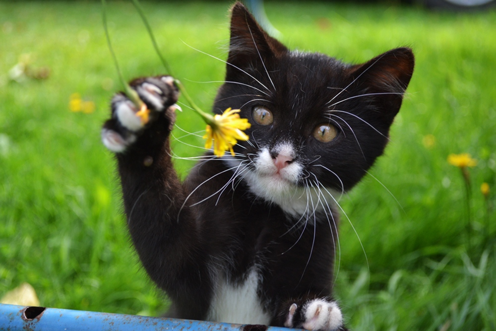 Кошки (Cats) - Страница 4 Katinas1_zps9cb50628