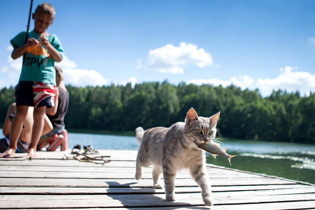 Кошки (Cats) - Страница 4 Katinas3_zps511dfed1