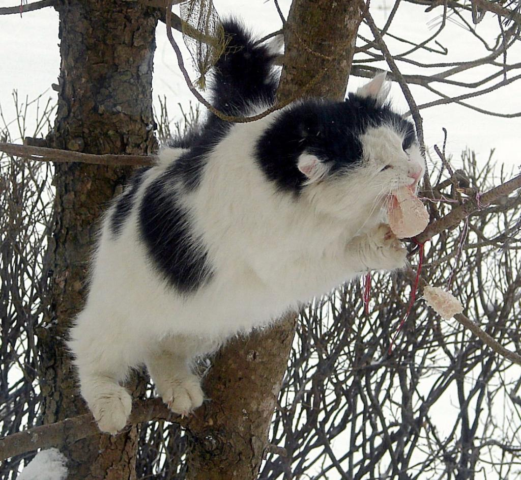 Кошки (Cats) - Страница 4 Katinas4_zpscd76dd1d