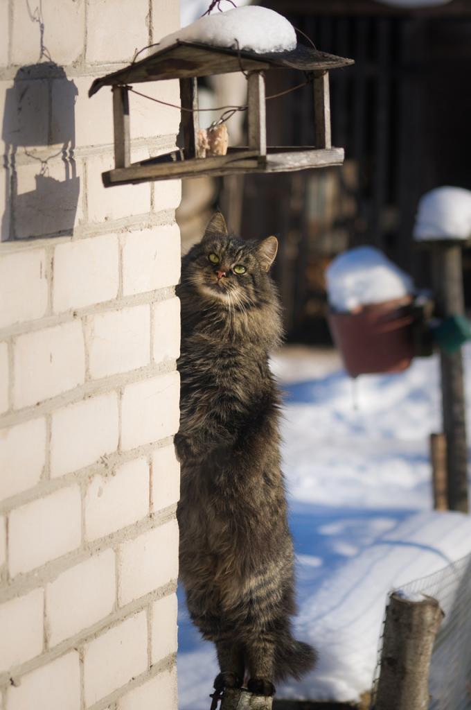 Кошки (Cats) - Страница 4 Katinas5_zps17890b52
