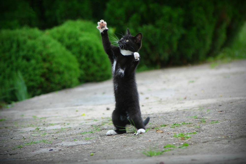 Кошки (Cats) - Страница 4 Katinas6_zpsc7f51949