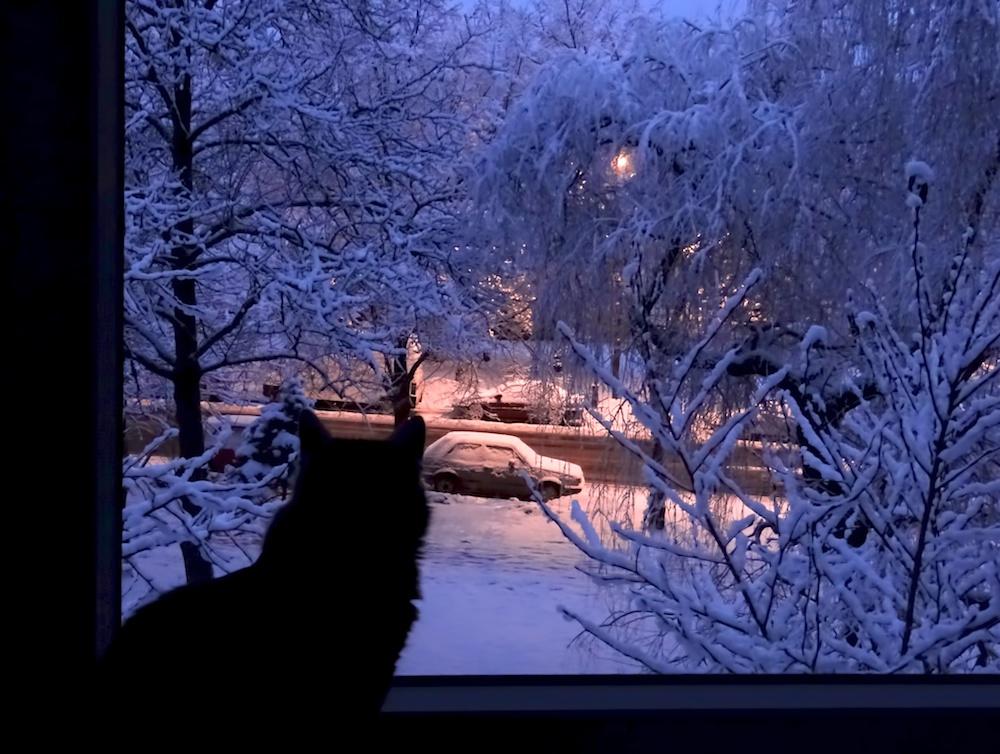 Кошки (Cats) - Страница 4 Katinas8_zps4d939e8d