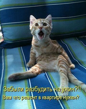 Улыбка (юмор, добрые анекдоты, смешные картинки) - Страница 2 Katinas_issigando_zps20535cae