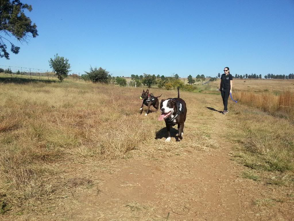 Today's walk part 2 pic heavy 20140429_092829_zpsx5ykvmup