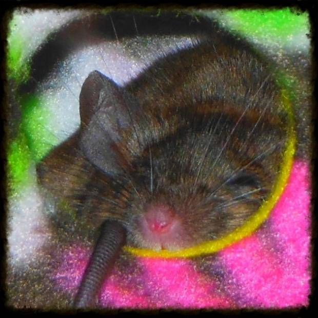 Jeni Felix Fisk Sleeping is a Mouse House (Super Cute)  1efb2811-3071-4efc-9868-122fc05b5092_zps267302f7