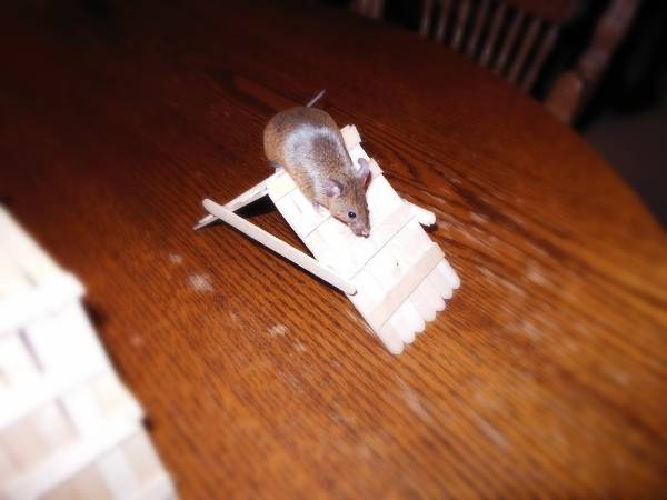 "♥ Baby Fancy Mice ""Coming soon"" ♥ E7a07bf2-5908-4d4e-bc14-1dba58b5eefc_zps0cdcfd91"
