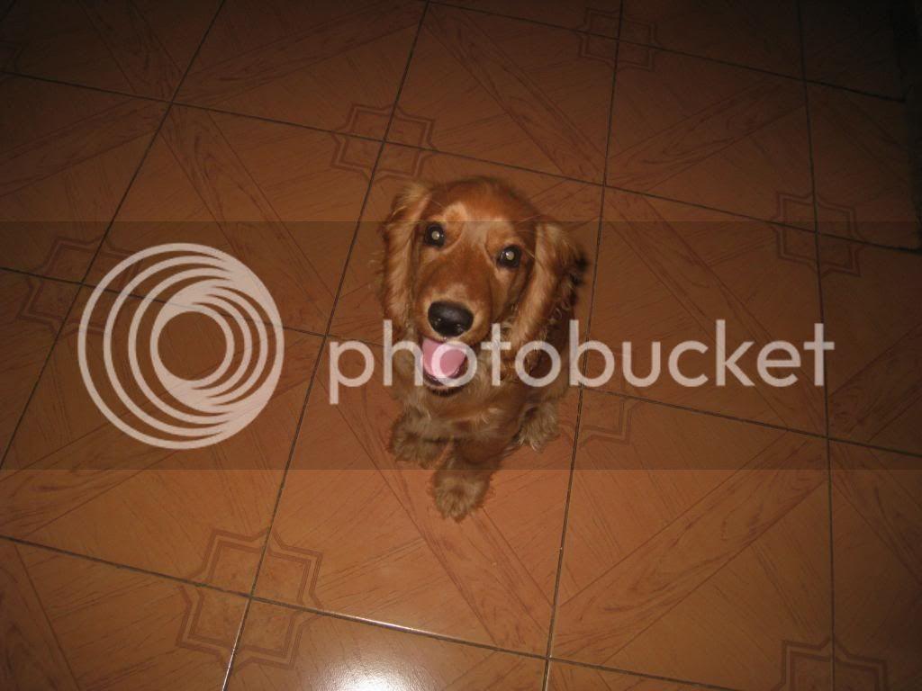 Fotos de nuestros cuchiflitines (aka mascotas) IMG_1670_zps5fb5c524