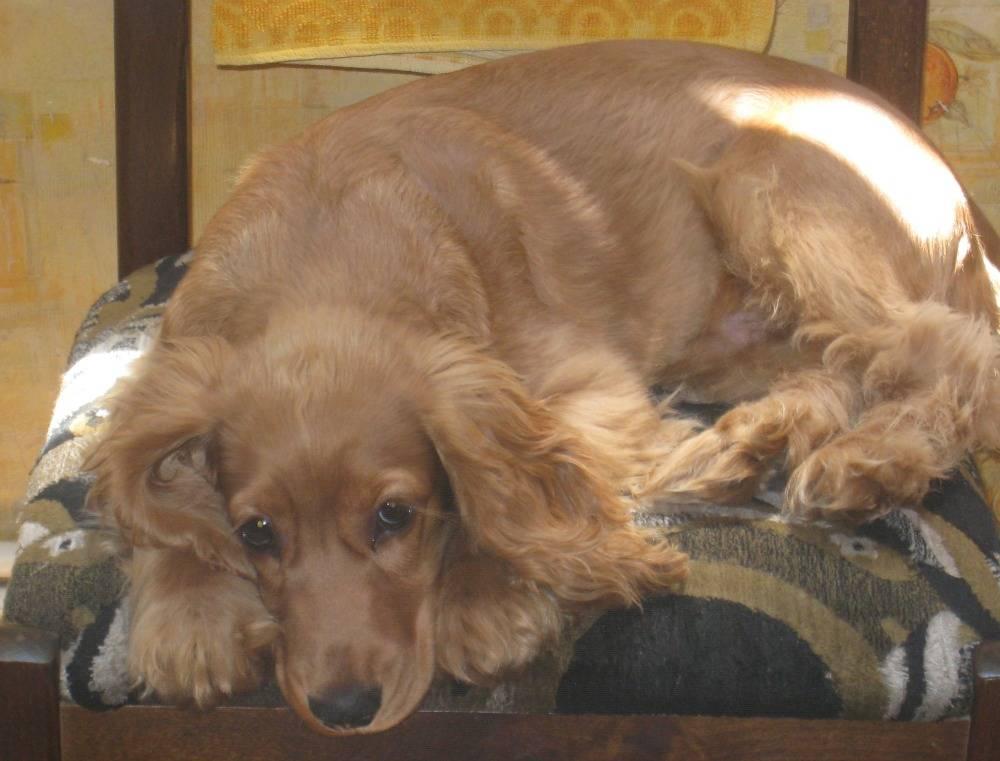 Fotos de nuestros cuchiflitines (aka mascotas) IMG_1699_zps3bb6738c
