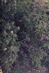 Alguem me ajuda a reconheçer esta planta? Flores_zpsde0f3cd4