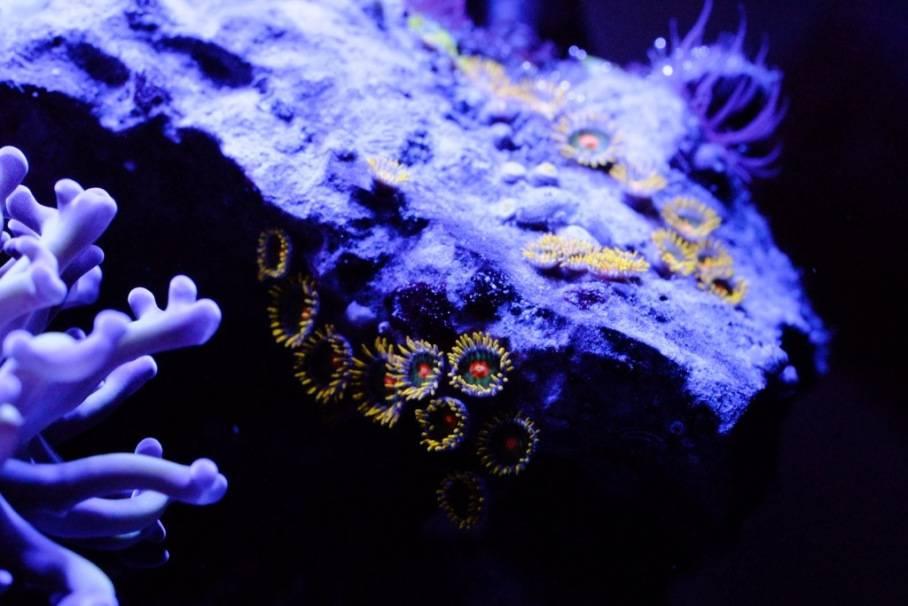 Mon Open Reef 91 - Nouvelle Vidéo p13 - Photos de macro p10 - Page 6 20130516-230647_zpsf6f5904b