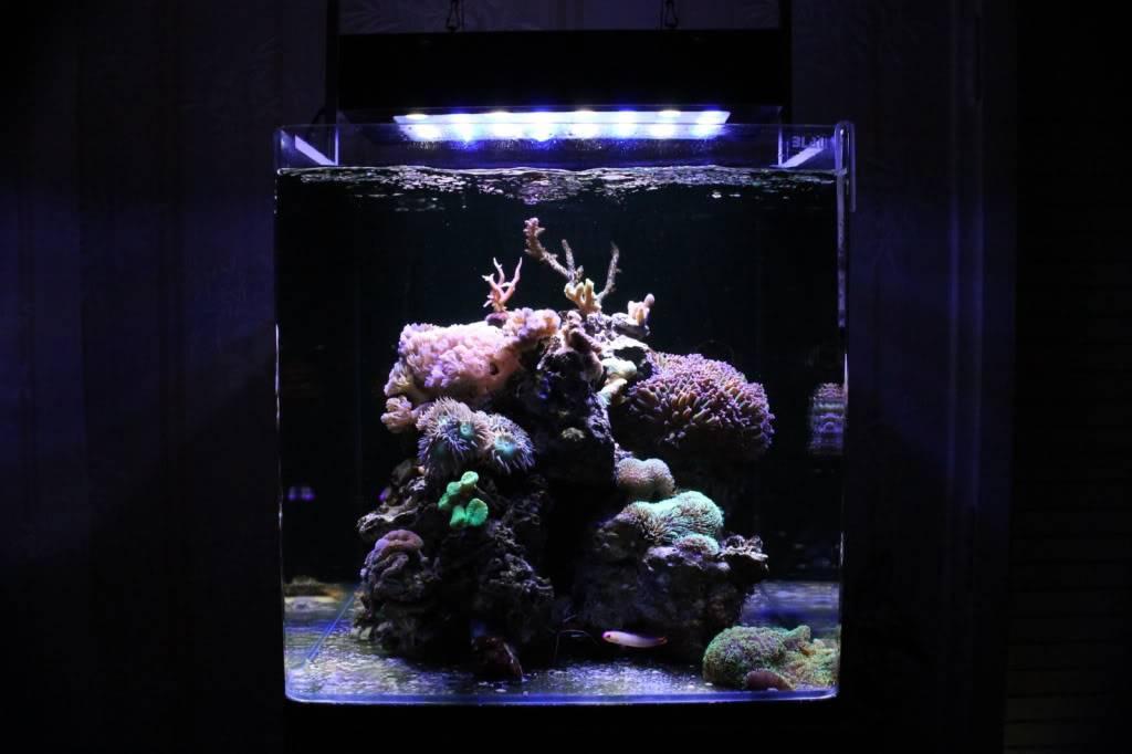 Mon Open Reef 91 - Nouvelle Vidéo p13 - Photos de macro p10 - Page 6 21fbe861ab00a6fd4633113831fd61cf_zps81ef57d7