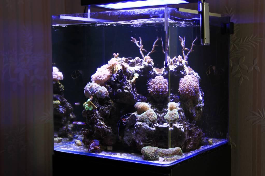 Mon Open Reef 91 - Nouvelle Vidéo p13 - Photos de macro p10 - Page 5 423425b3c09faf4397493d7e65c0fb4e_zps956f77a9