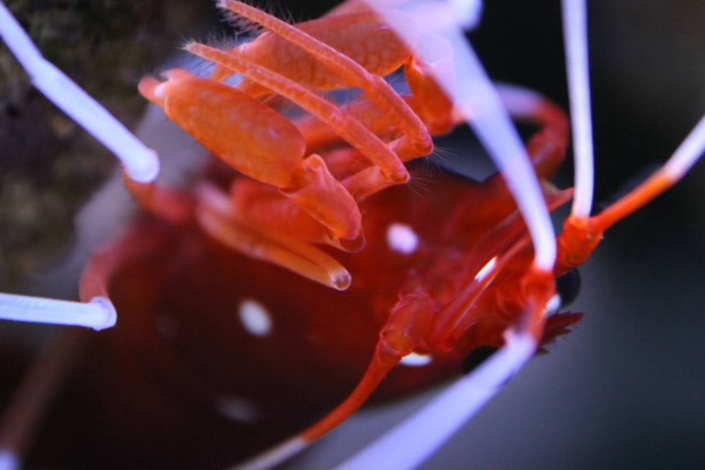 Mon Open Reef 91 - Nouvelle Vidéo p13 - Photos de macro p10 - Page 7 48d95ff5e47e2a14260e80191f383dd6_zps569a1a4d
