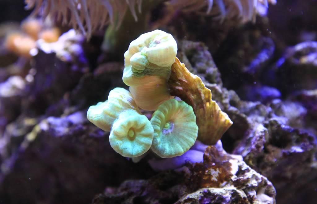 Mon Open Reef 91 - Nouvelle Vidéo p13 - Photos de macro p10 - Page 5 5667c8d5ba4219bde2e7654e4b147773_zpsdf2132f9
