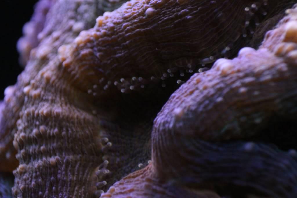 Mon Open Reef 91 - Nouvelle Vidéo p13 - Photos de macro p10 - Page 6 9a2516472f7c7ff538e05fd796e6fd3c_zpsfe194f6a