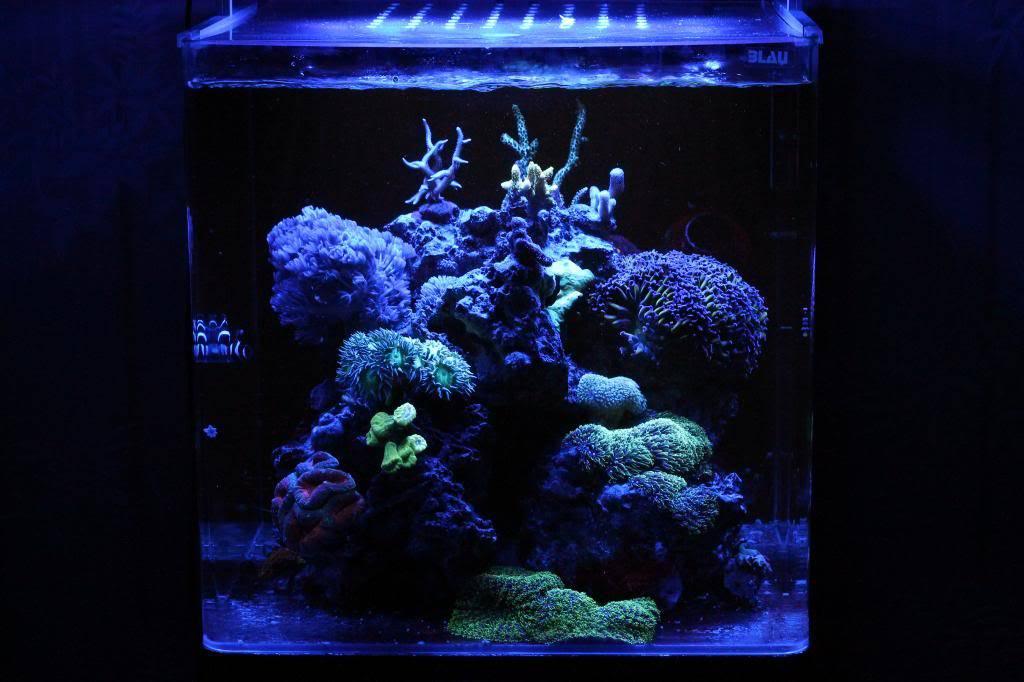 Mon Open Reef 91 - Nouvelle Vidéo p13 - Photos de macro p10 - Page 9 IMG_4458_zps0af3867b