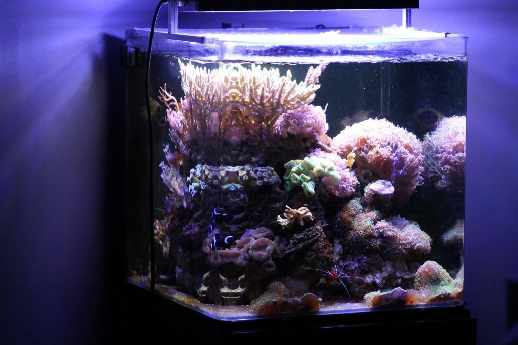 Mon Open Reef 91 - Nouvelle Vidéo p13 - Photos de macro p10 - Page 10 IMG_9273_zpsa15894a4
