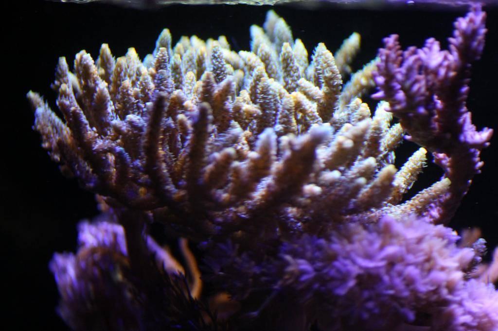 Mon Open Reef 91 - Nouvelle Vidéo p13 - Photos de macro p10 - Page 10 IMG_9276_zps6bbef93f