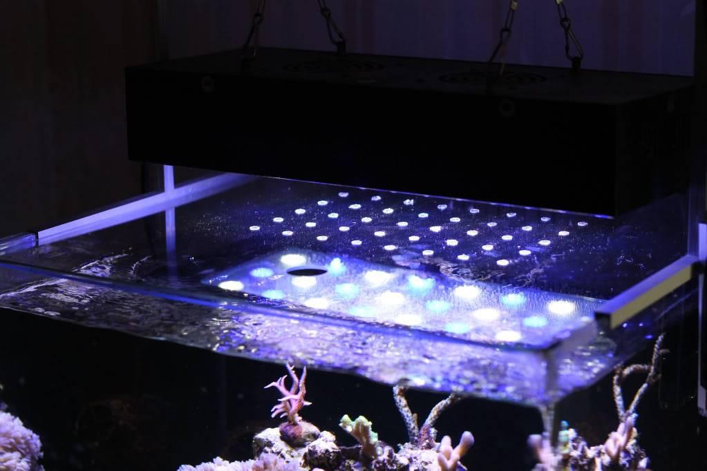 Mon Open Reef 91 - Nouvelle Vidéo p13 - Photos de macro p10 - Page 7 Af079d03554cde7e6ffdf2b7eeadafb0_zps612d7720